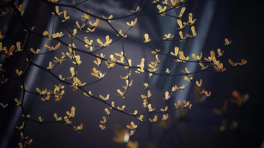"""<p> Những chồi non lấp lánh như """"Hạt nắng"""" qua ống kính của tác giả Hoàng Ngọc Thanh.</p>"""